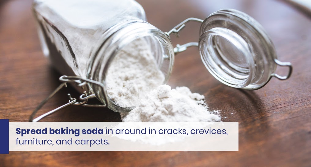 """baking soda - text: """"Spread baking soda in around in cracks, crevices, furniture, and carpets."""""""