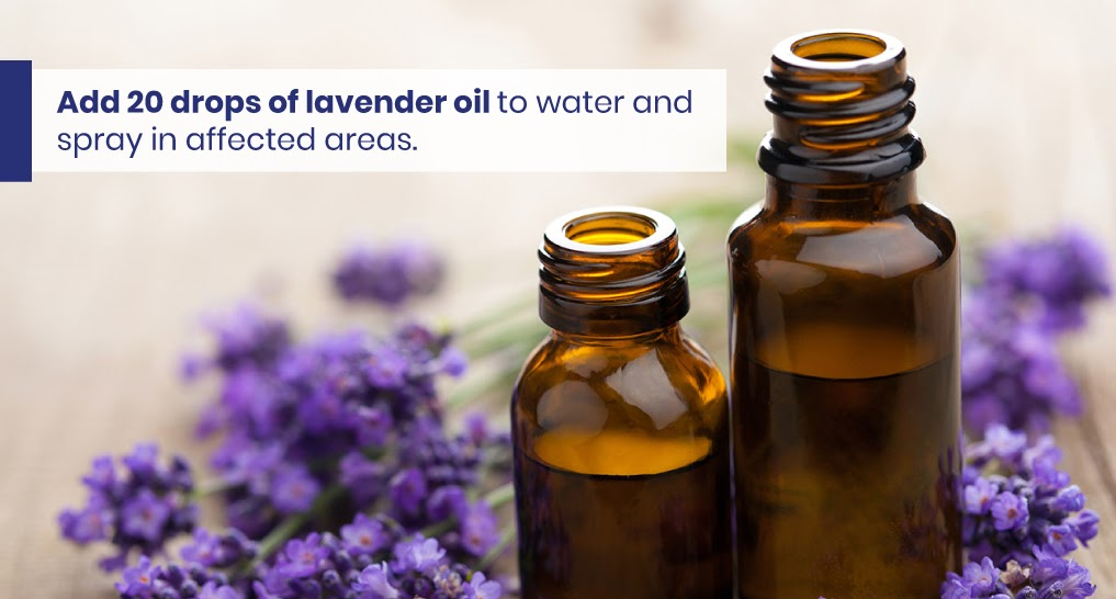 """lavender oil - text: """"Add 20 drops of lavender oil to water and spray in affected areas."""""""