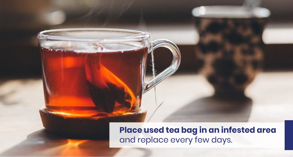 """black walnut tea - text: """"Place used tea bag in an infested area and replace every few days."""""""