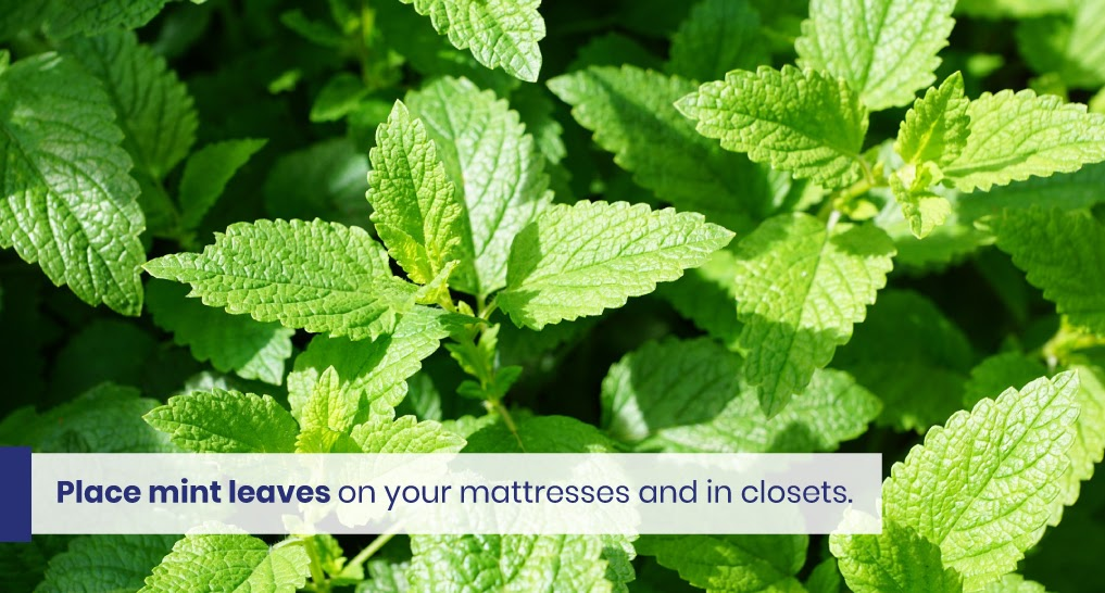 """mint leaves - text: """"Place mint leaves on your mattresses and in closets."""""""
