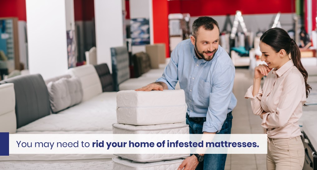 """mattress salesman - text: """"You may need to rid your home of infested mattresses."""""""