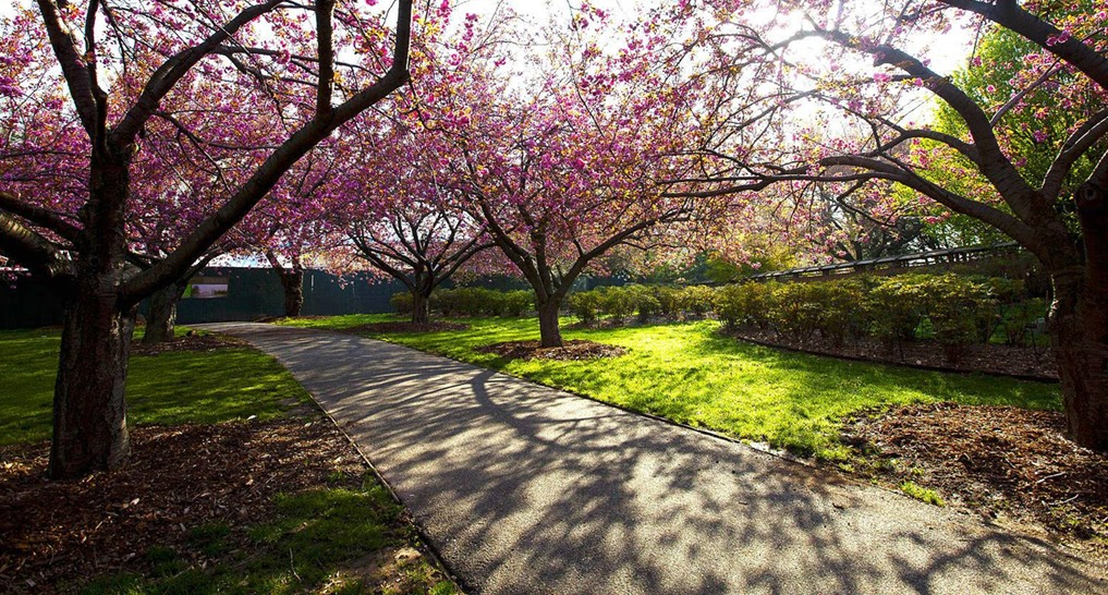 Image of Brooklyn botanic garden